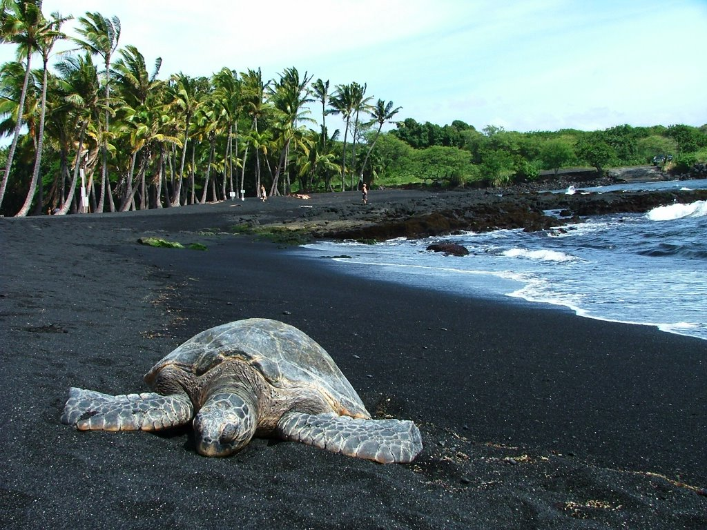 Punaluu-Black-Sand-Beach-Hawaii-2