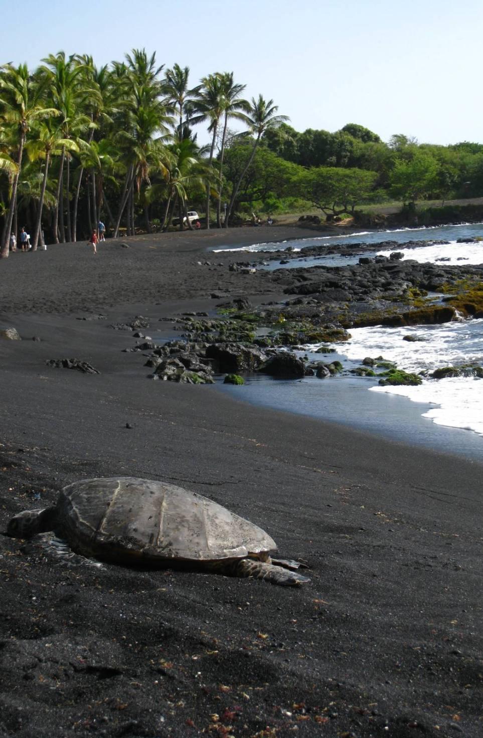 Punaluu-Black-Sand-Beach-Hawaii