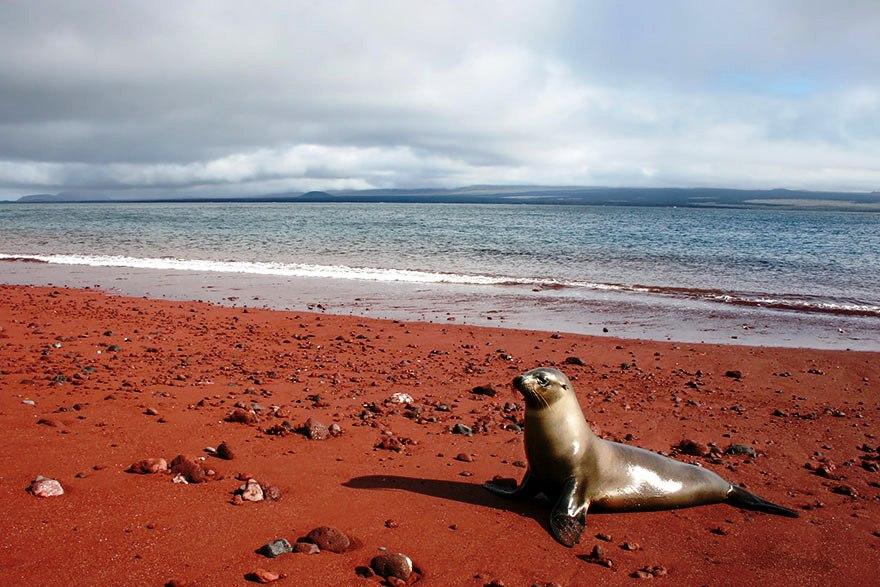 Red-Sand-Beach-Rabida-Galapagos-2