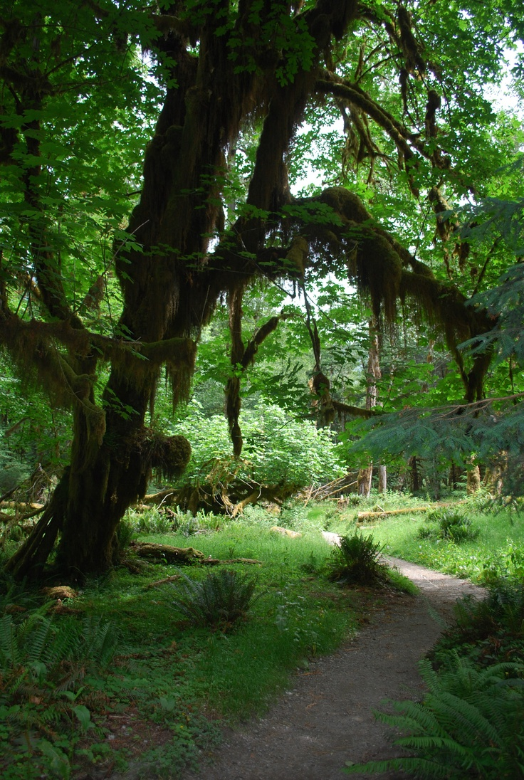 Visiting the Hoh Rain Forest 1