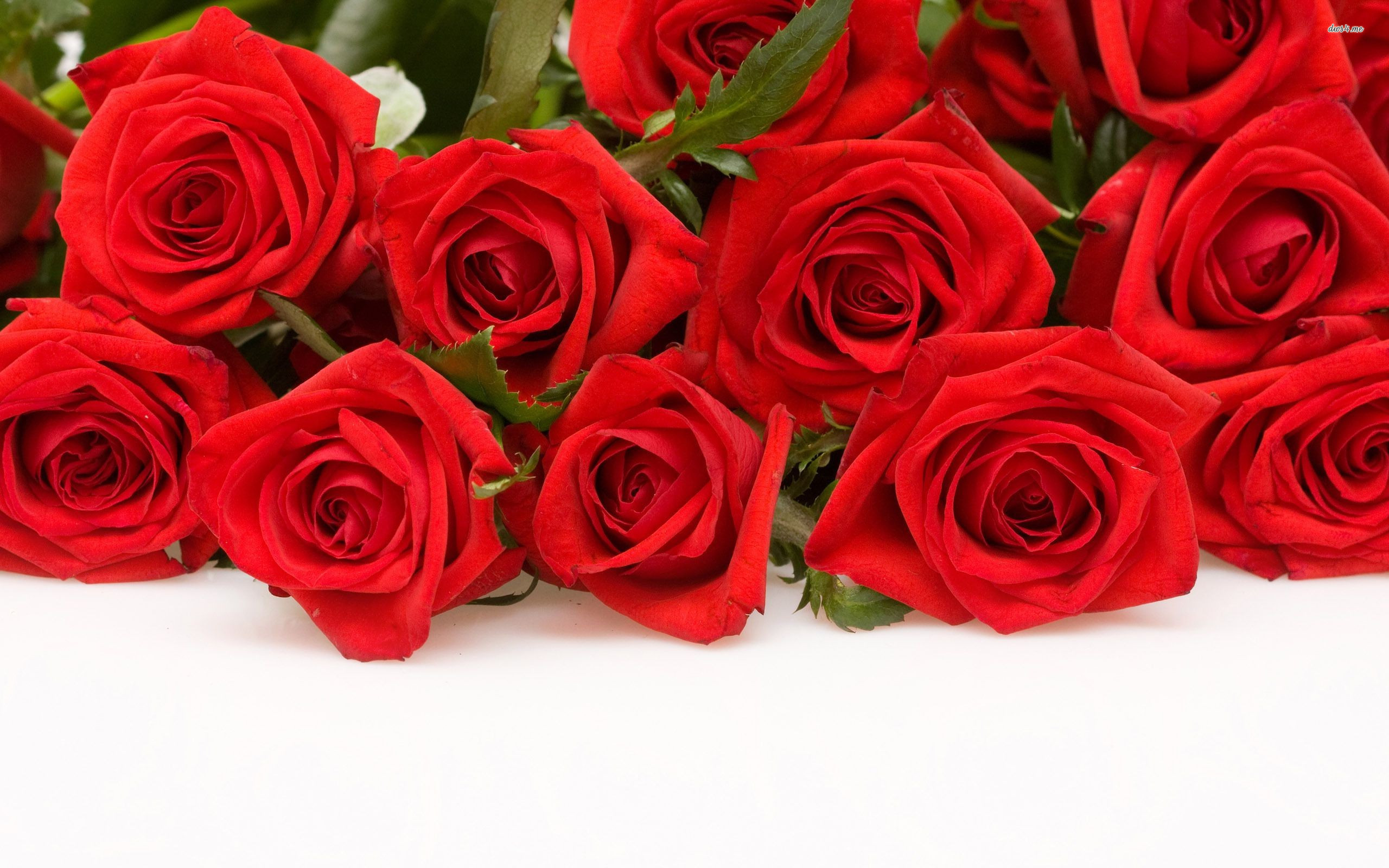 50 beautiful red rose images to download the wow style - Red rose flower hd images ...