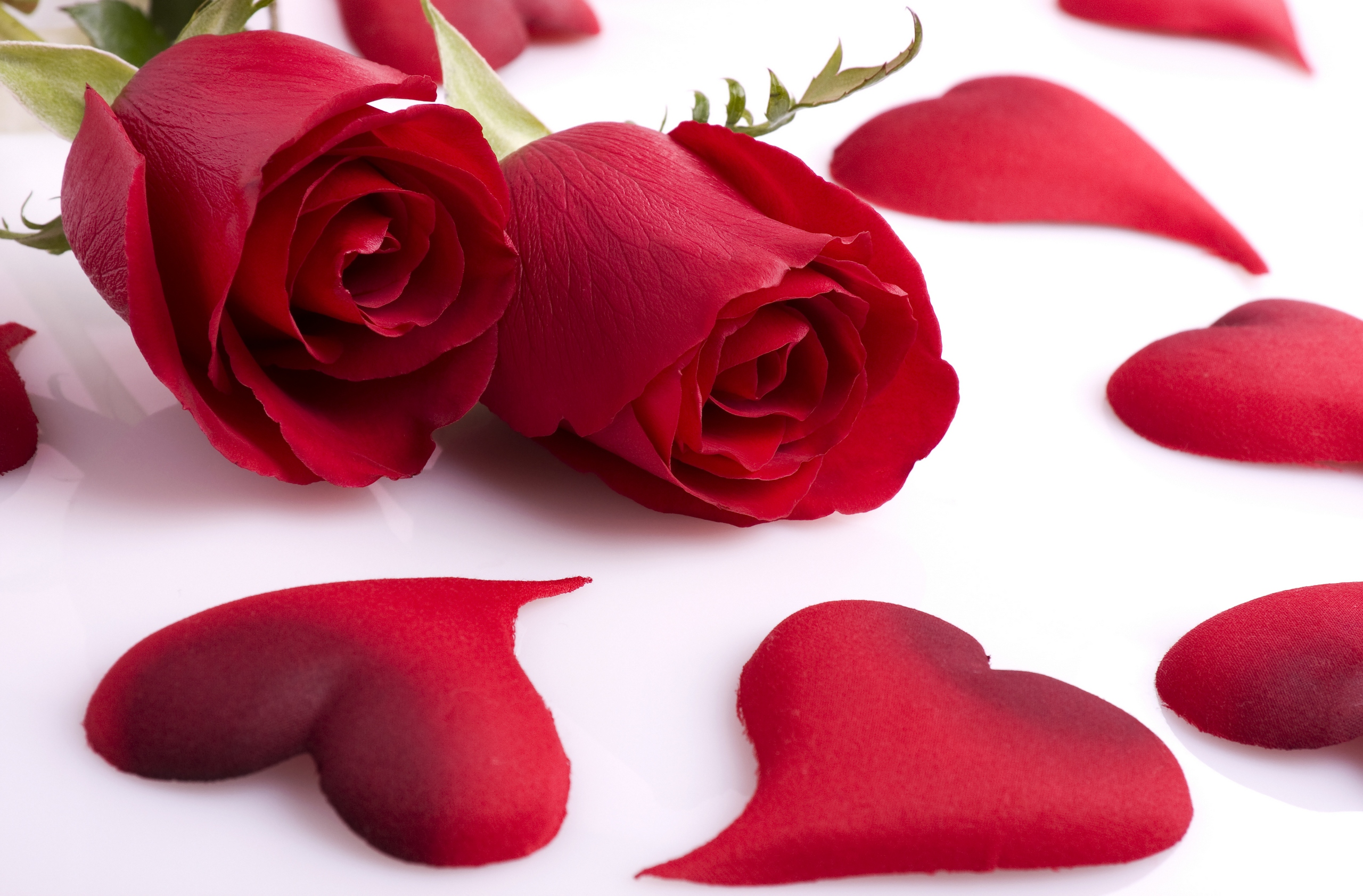Red-Rose-Love-Heart-Shaped-Petal-HD-Wallpaper