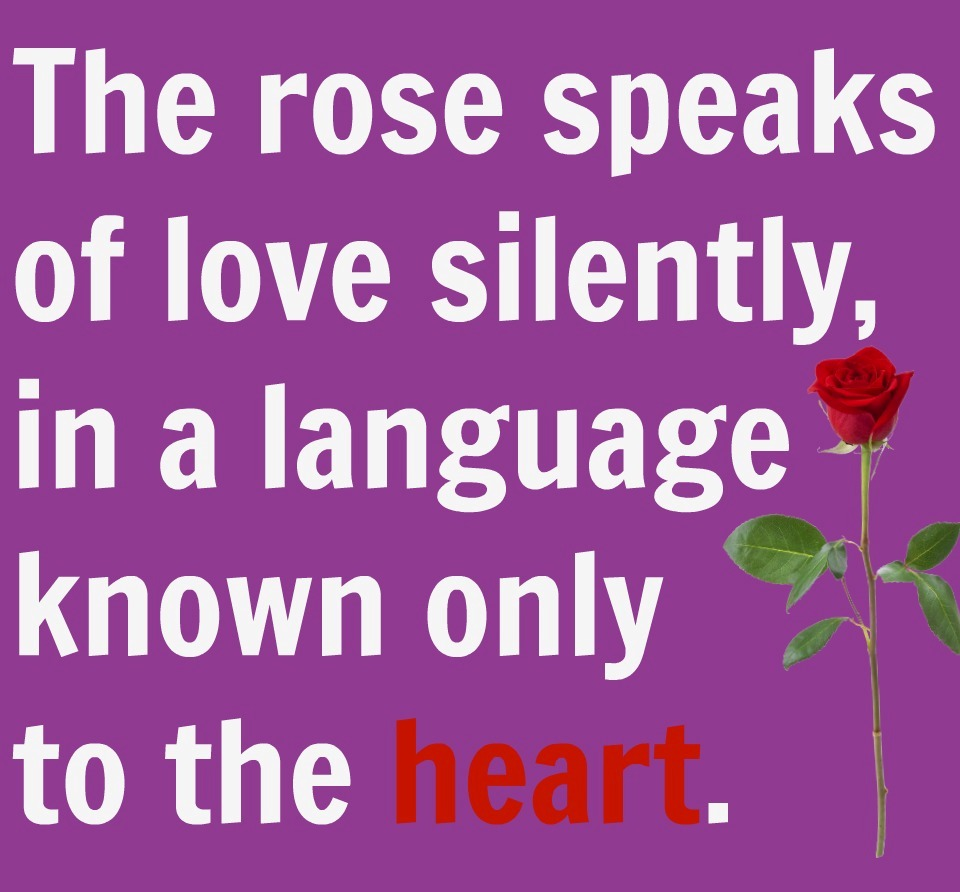 love rose quote