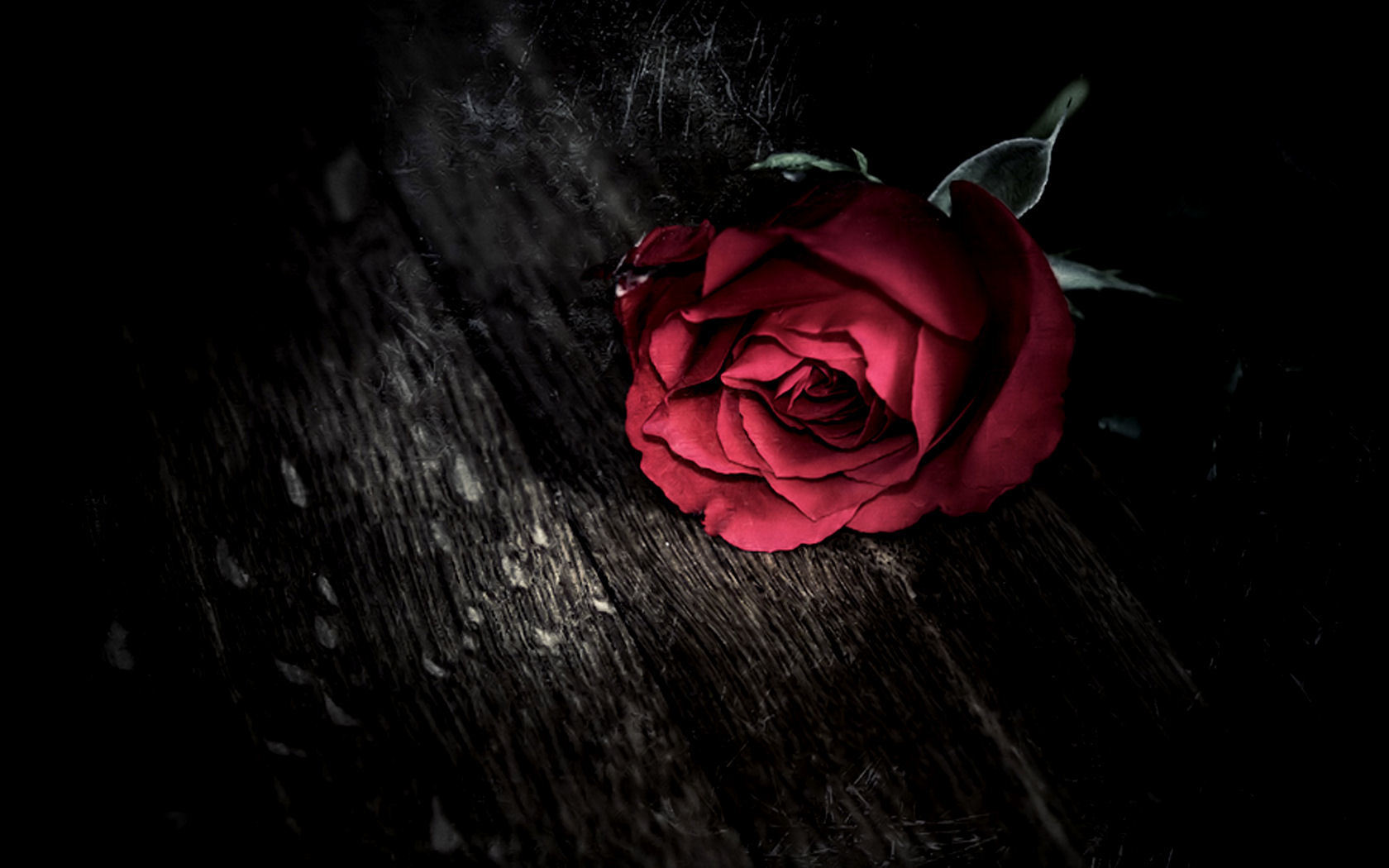 50 Beautiful Red Rose Images To Download – The WoW Style