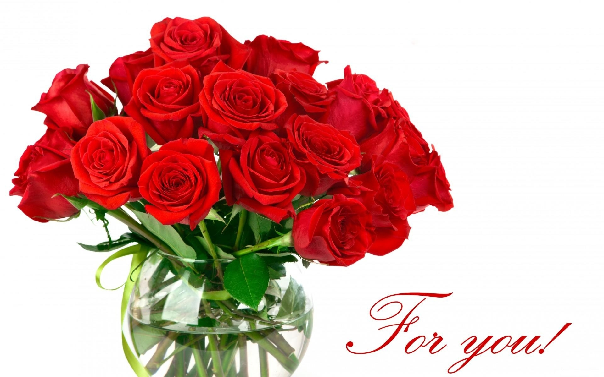 red rose love