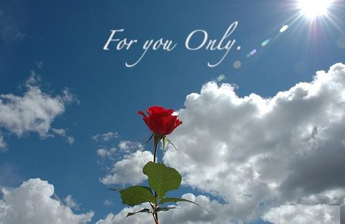 50 Best Rose Quotes To Show Your Love