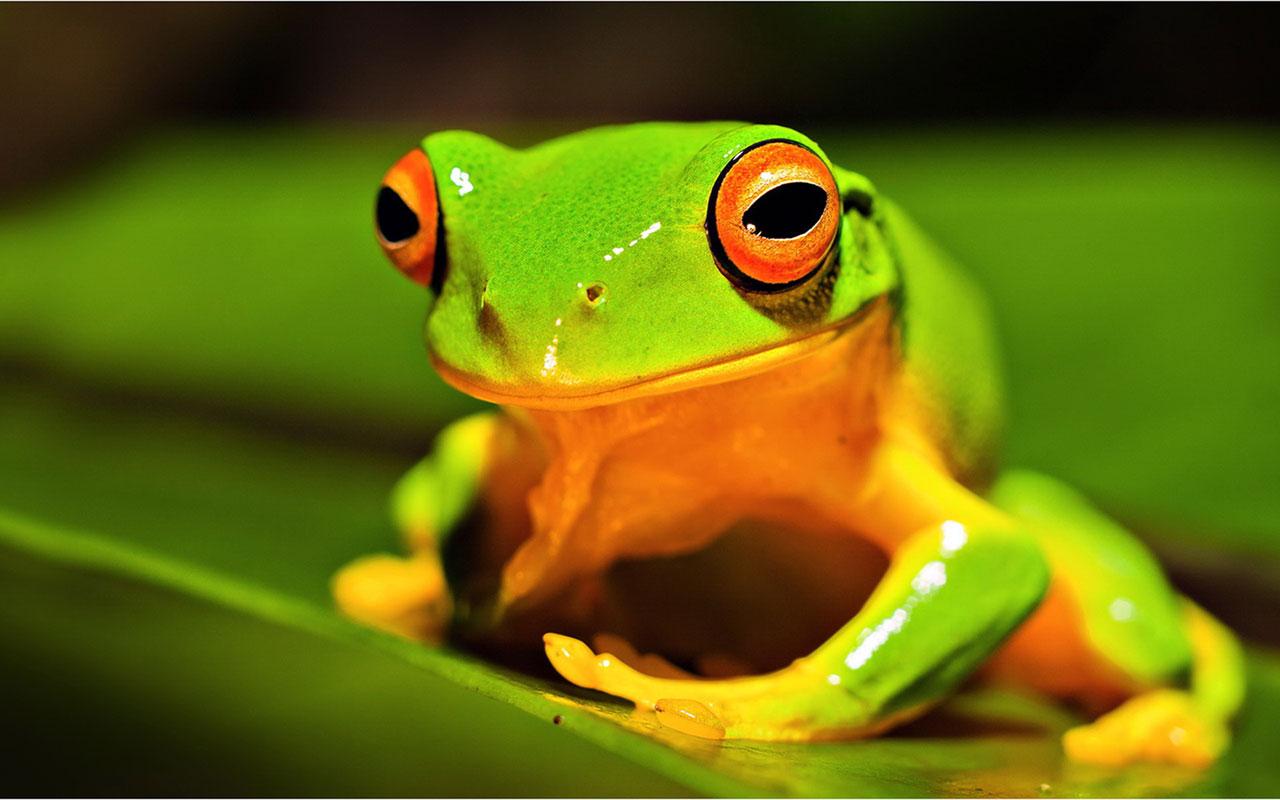 wildlife photography inspiration