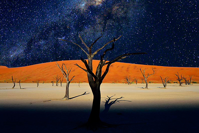 Camel Thorn Trees – Naukluft Park, Namibia