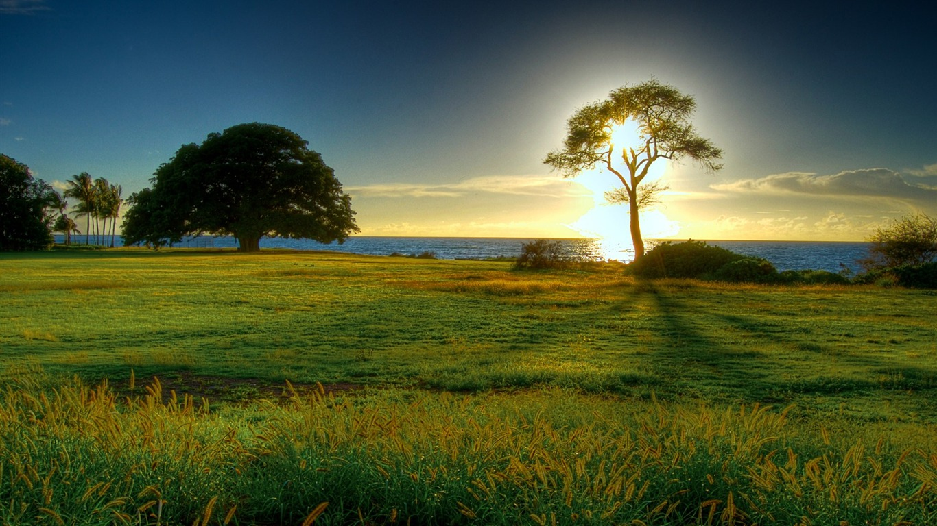 Landscape Nature Photography Sunrise Tree