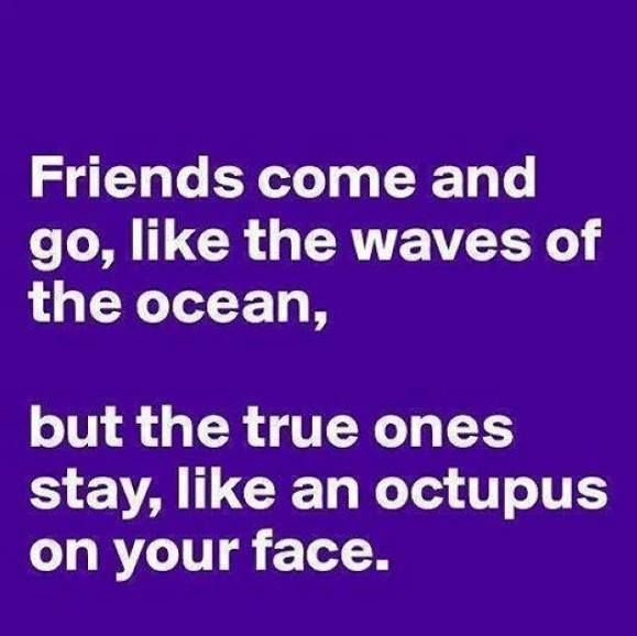 Best-Friendship-Quotes-funniest-quotations