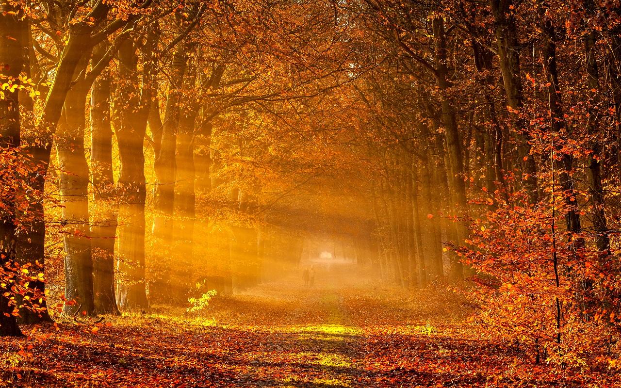 Autumn-Wallpaper-8