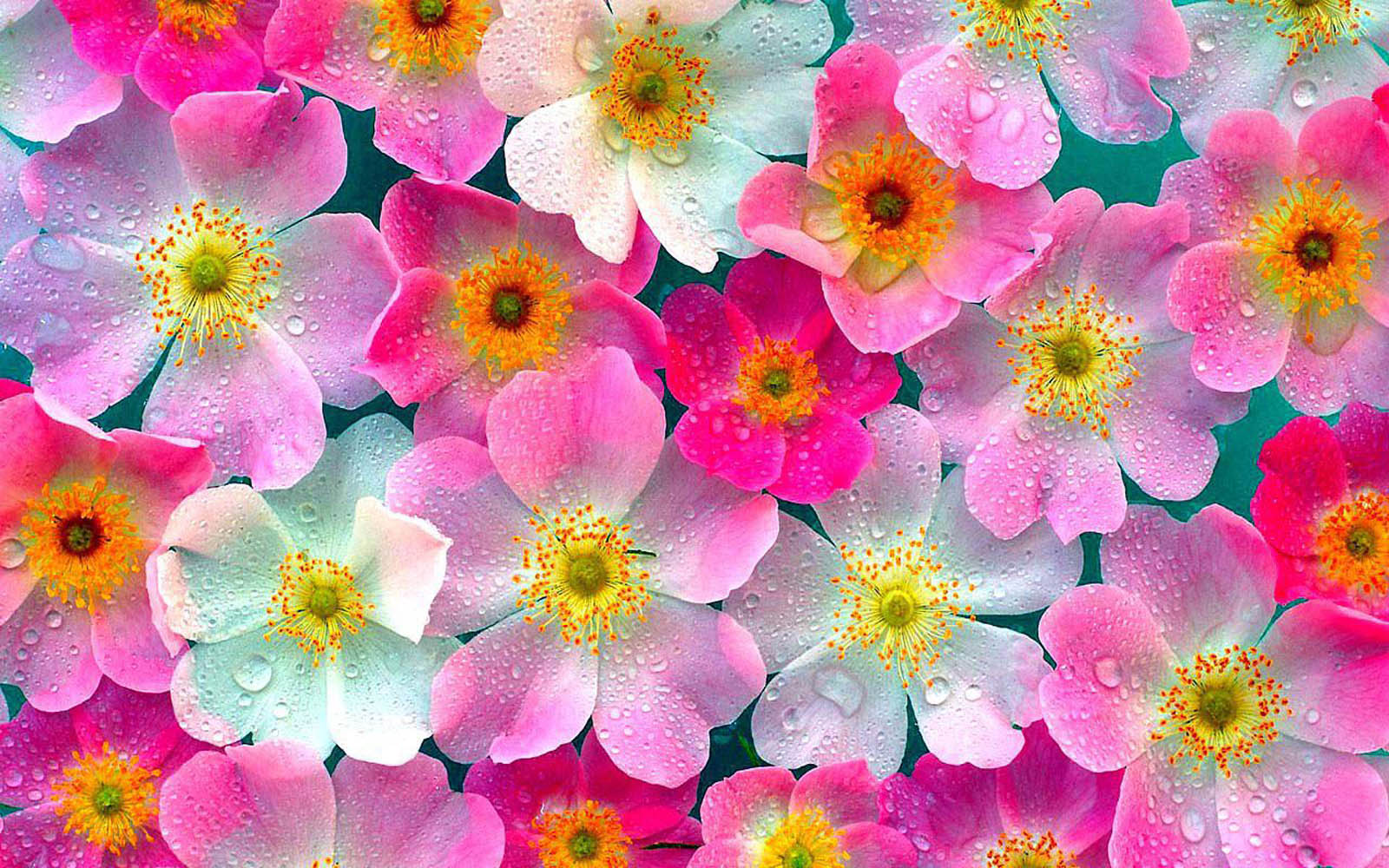 flower-wallpaper-20