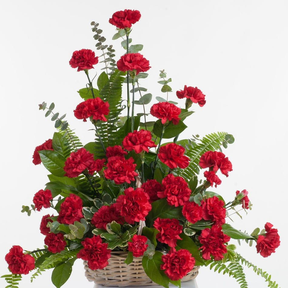 Red carnations for motivation