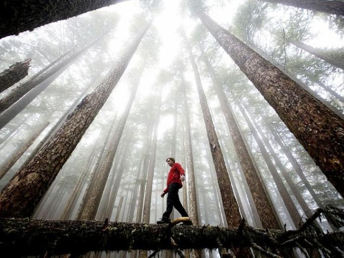 Olympic National-Park Washington ,USA 10