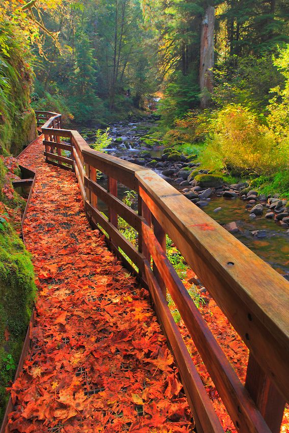 Sweet Creek Trail Scafold, Oregon