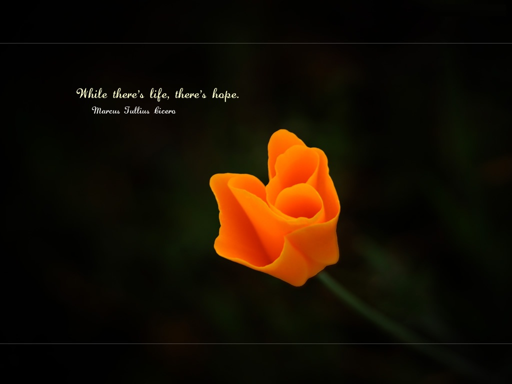 Quotes-While-Theres-life-theres-hope-quote-wallpaper