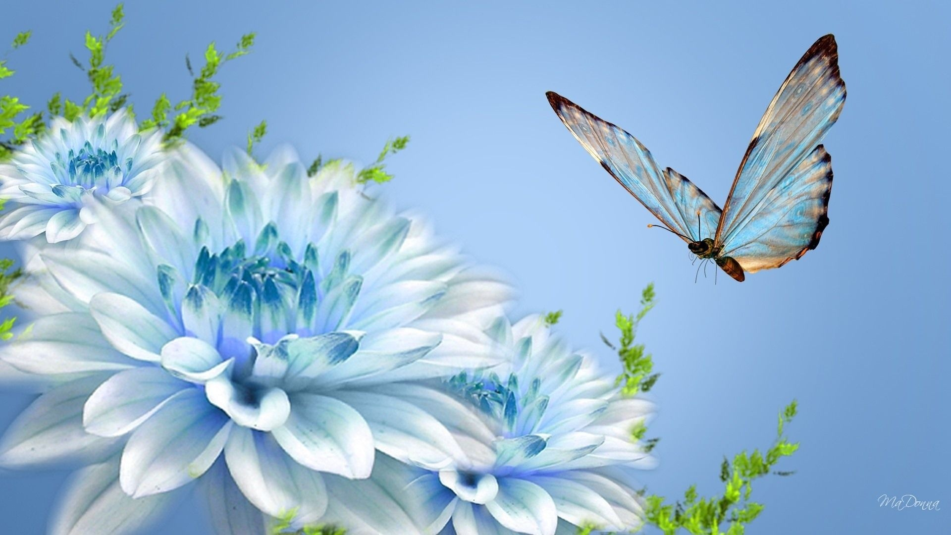 cute-blue-flowers-butterfly-desktop-background-picture-new-best-hd-wallpapers-of-blue-flowers
