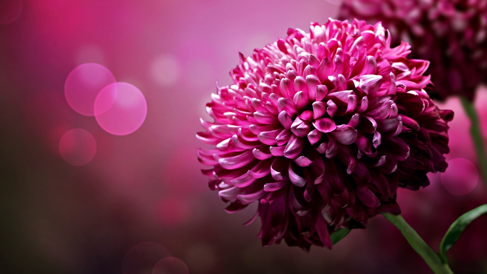 flower-wallpaper-rar-nature-picture-flower-wallpaper