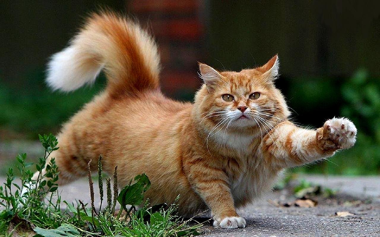 Beautiful-Cat-cats-16096437-1280-800
