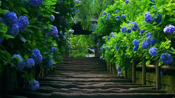 Stairs-Blue-Flowers-Desktop-Wallpapers-and-Backgrounds-Desktop-Background