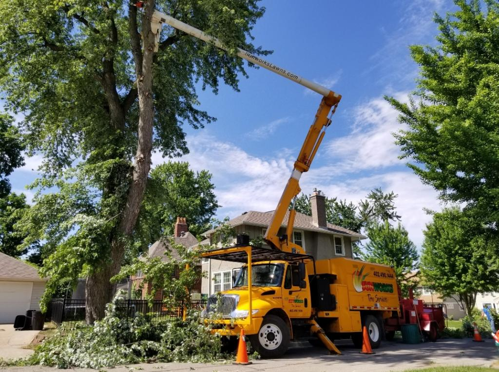 The Importance of a Tree Service & Tree Removal Company for Your Property