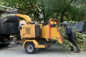 What Can A Tree Service Jackson Mississippi Help With?