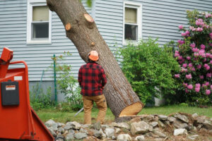 How Much Do Tree Surgeons Charge