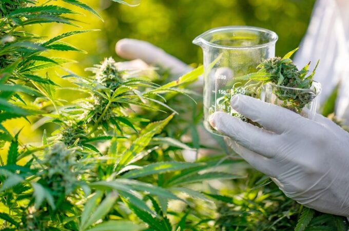 How Medicinal Cannabis Work and It's Benefits