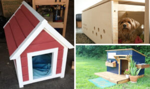 Dog House Designs to Make Your Furry Friend Feel At Home